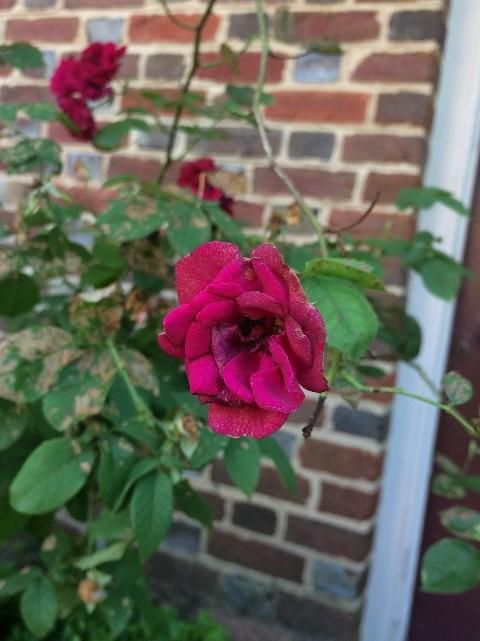 katie flower